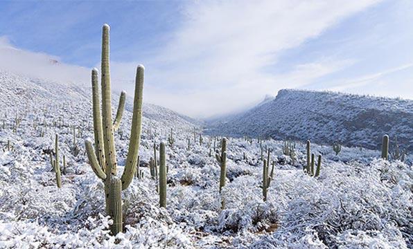Wild West Mercantile Winter Range Sale